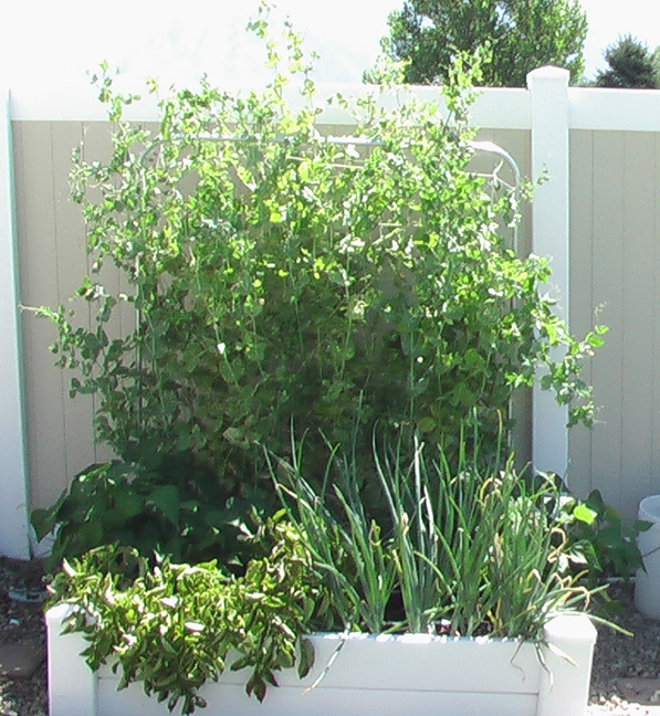 square foot gardening july peas