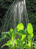 square foot gardening water