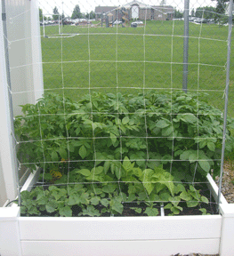 square foot gardening support cukes