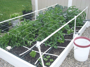 square foot gardening support tomato1