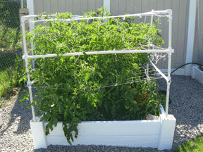 square foot gardening support tomato3