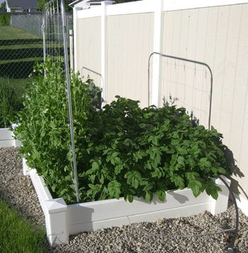 square foot gardening west north 062110