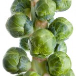 square foot gardening Brussels Sprouts 150x150
