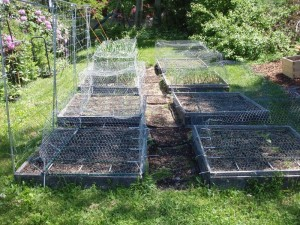 square foot gardening Cage Over Garden 300x225