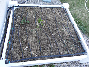 square foot gardening DSC00343 small