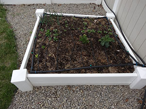 square foot gardening DSC00350 small