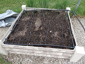 square foot gardening DSC00352 small