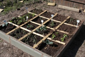 square foot gardening IMG 06472 300x200