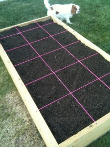 square foot gardening IMG 0913 225x300