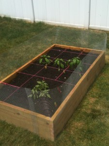 square foot gardening IMG 0927 225x300