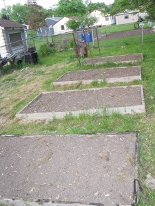 square foot gardening IMG 1917 225x300