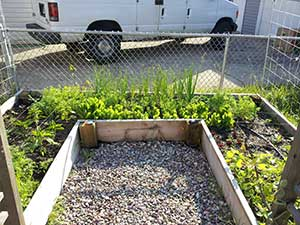 square foot gardening Jim old garden
