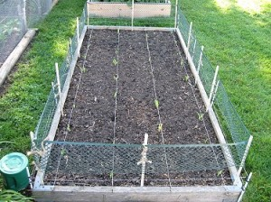 square foot gardening Open Fence Around Bed 300x224