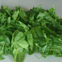 square foot gardening spinach